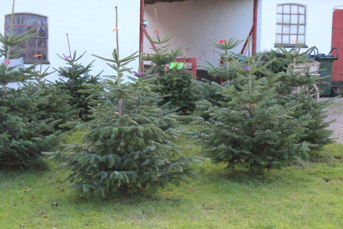 Gårdsalg med juletræer