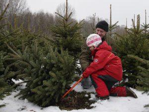 Fæld selv juletræ
