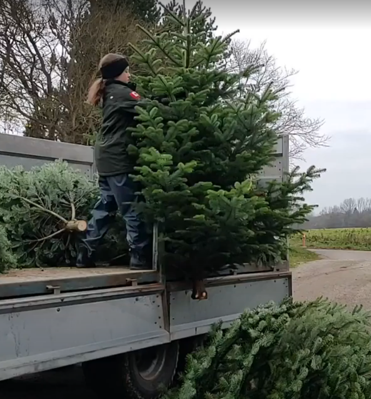 nanna læsser træer af vogn